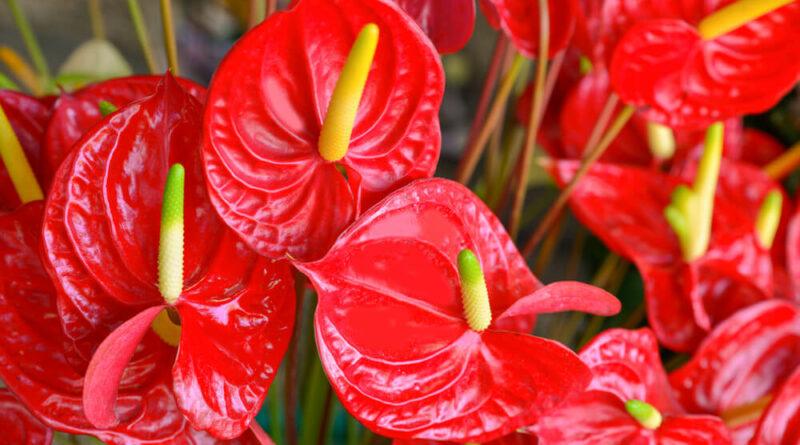 ¡Encuentra increíbles variedades de anturios y orquídeas!